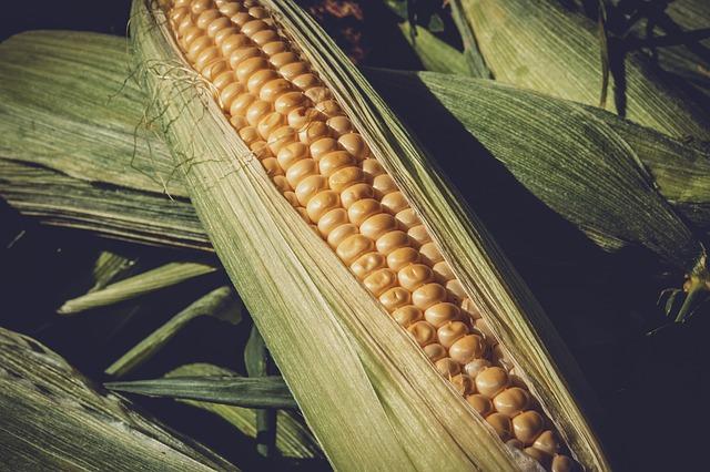 sweet-corn-3705687_640