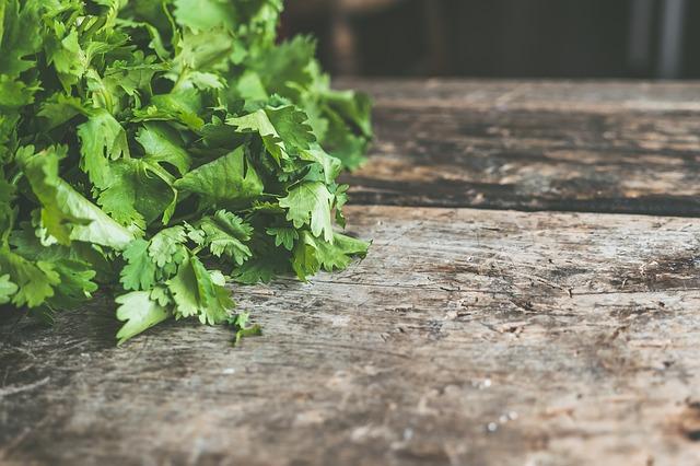 Coriander leaves - A wonder herb 2